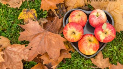 Jesenné fotenie vo Vysokých Tatrách