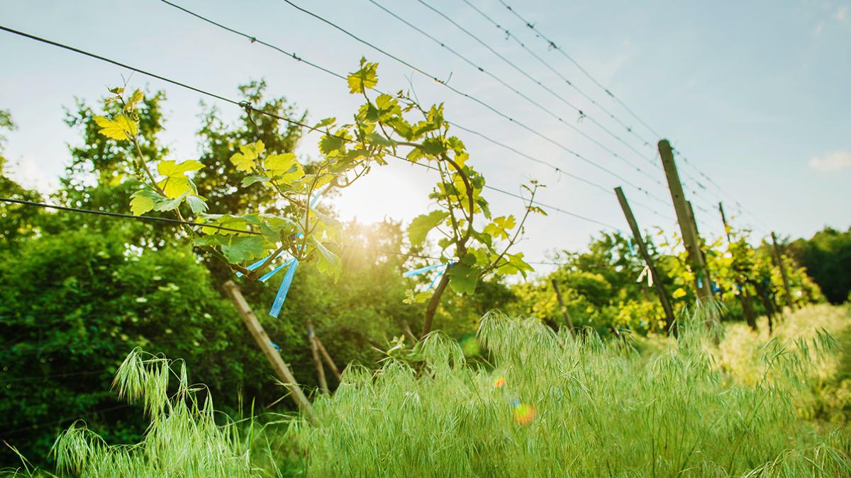 Slovenské víno v Tatrách